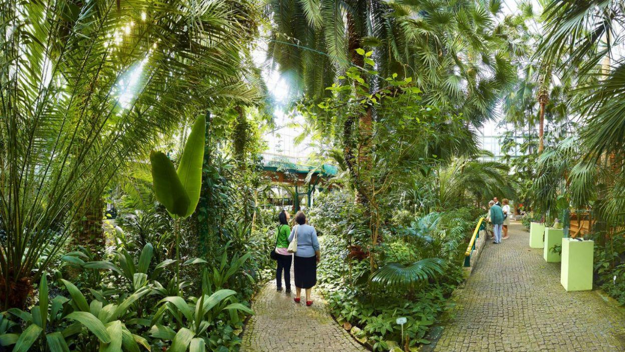 Palmiarnia Miejska w Gliwicach jest oazą zieleni w centrum miasta. To trzeci co do wielkości obiekt tego rodzaju w Polsce (fot. slaskie.travel/ T.Renk)