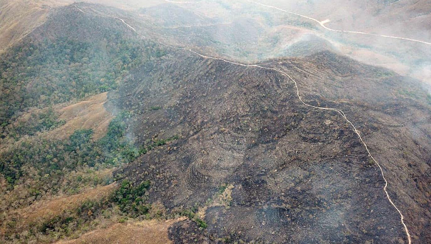 Potężne pożary w lasach Amazonii (fot. PAP/EPA/MATO GROSSO FIREFIGHTERS HANDOUT)