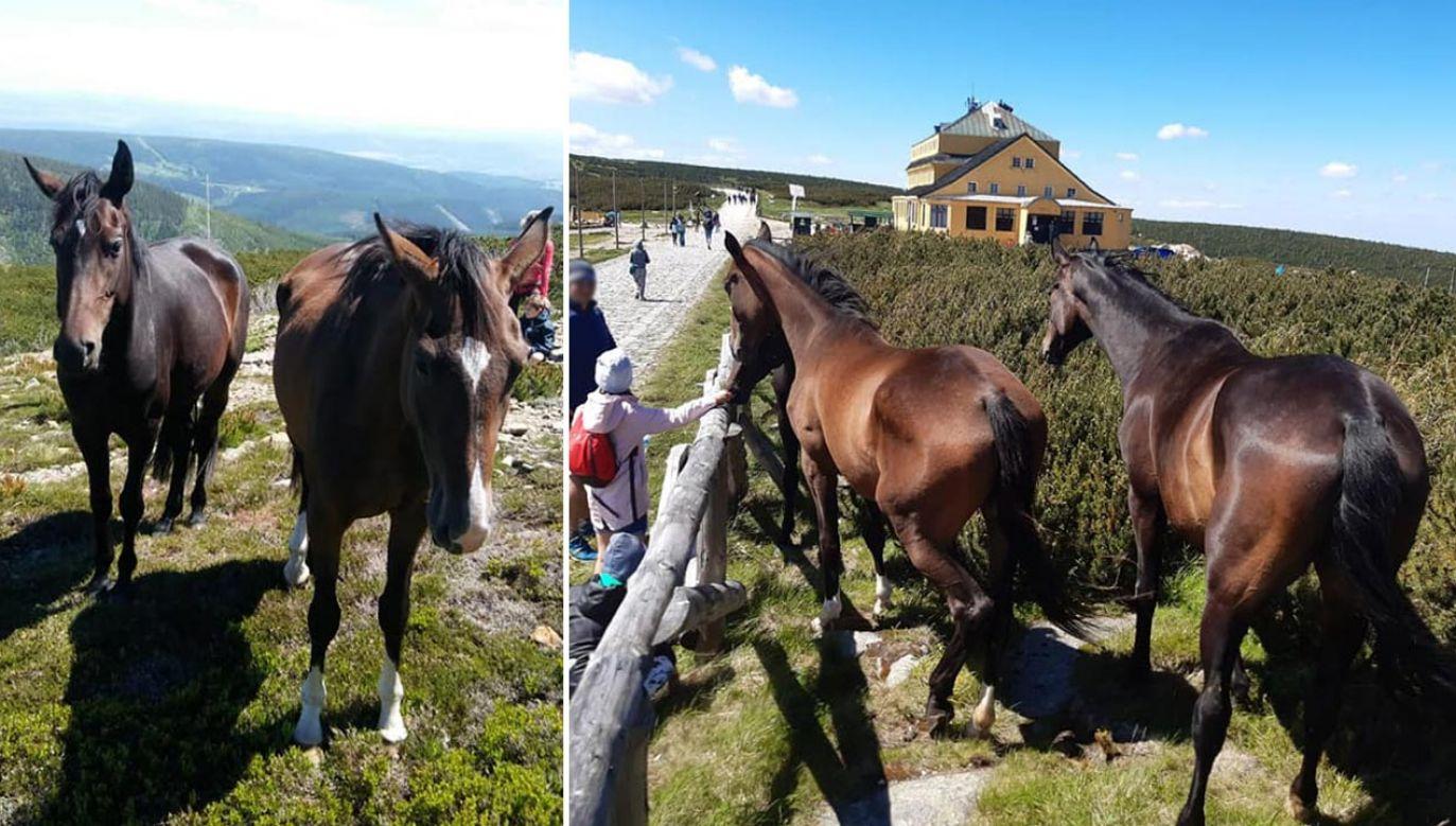 Pomogli turyści, którzy zgłosili sprawę Straży Karkonoskiego Parku Narodowego (fot. Facebook/Karkonoski Park Narodowy)