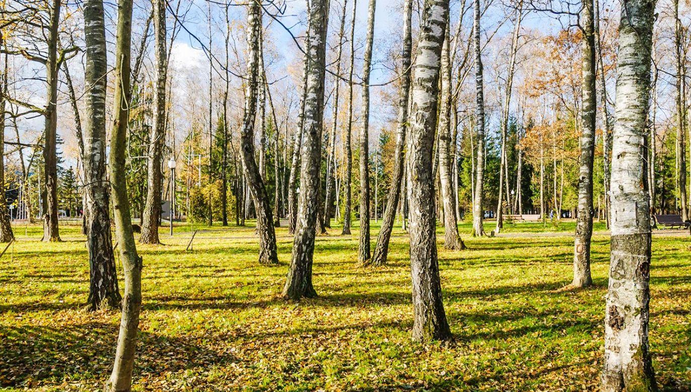 Temperatura wyniesie od 8 st. na wschodzie do 16 st. na zachodzie kraju (fot. Shutterstock)