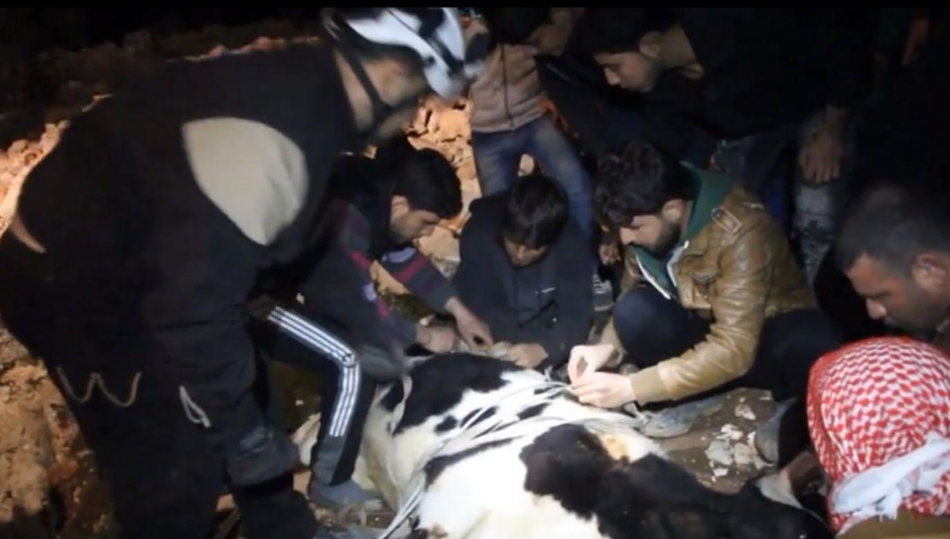 Syryjska Obrona Cywilna przy pomocy dźwigu i lin uratowała krowę z szybu (fot. SyriaCivilDef)