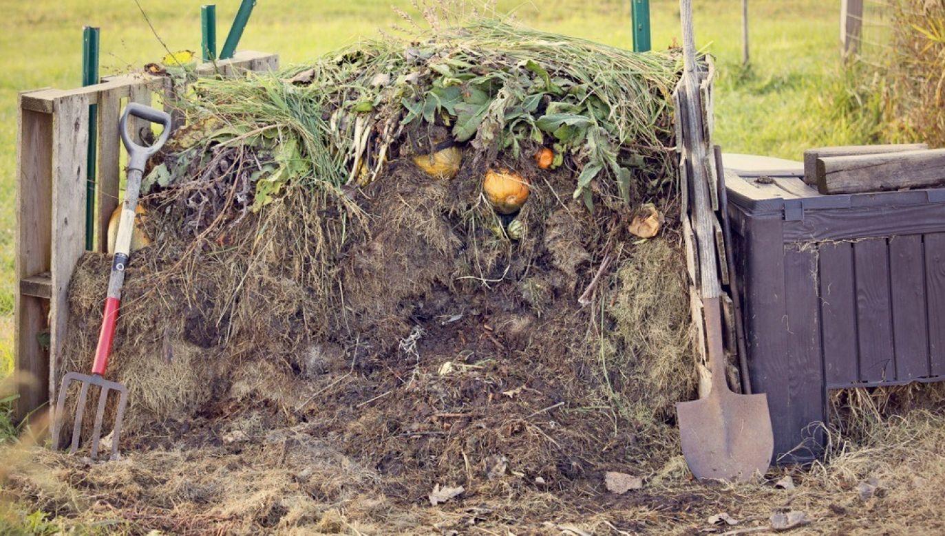 Ciało znajdowało się w kompostowniku na działkach (fot. Shutterstock/Lonny Garris, zdjęcie ilustracyjne)