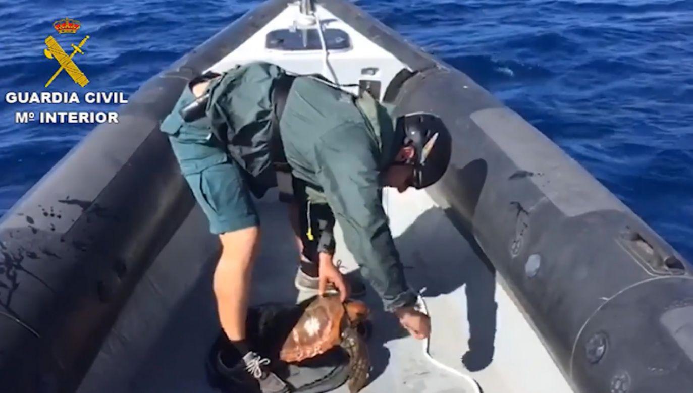 Straż Obywatelska wyplątała żółwia morskiego z sieci rybackiej (fot. Spanish Civil Guard)