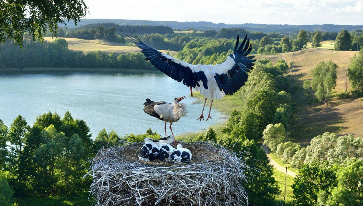 Zdjęcie zostało wykonane niedaleko Suwałk nad jeziorem Szurpiły (fot. Twoje info/PZ STUDIO/Zbigniew Panow)
