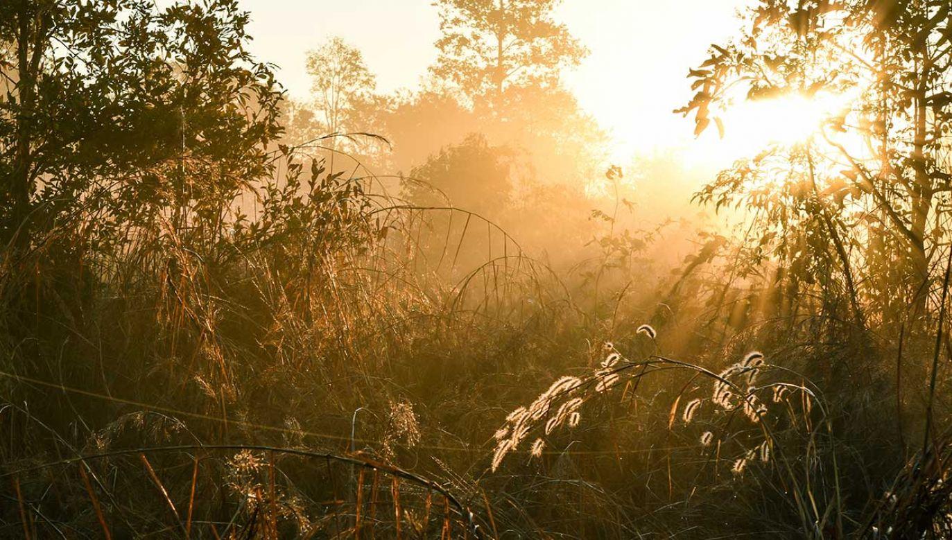 Przez znachorów roślina była stosowana m.in. jako środek rozkurczowy (fot. Shutterstock/Kagai19927)