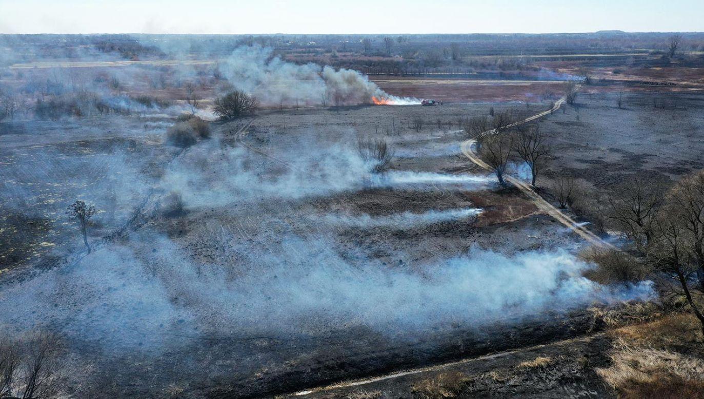 Od początku roku straż w Małopolsce gasiła już 2 tysiące tego typu pożarów (fot. PAP/Leszek Szymański)