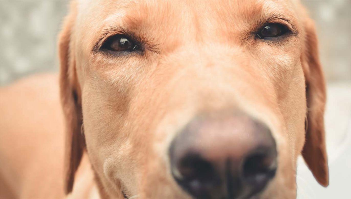 Psy mają niezwykle wrażliwy węch (fot. Pexels)