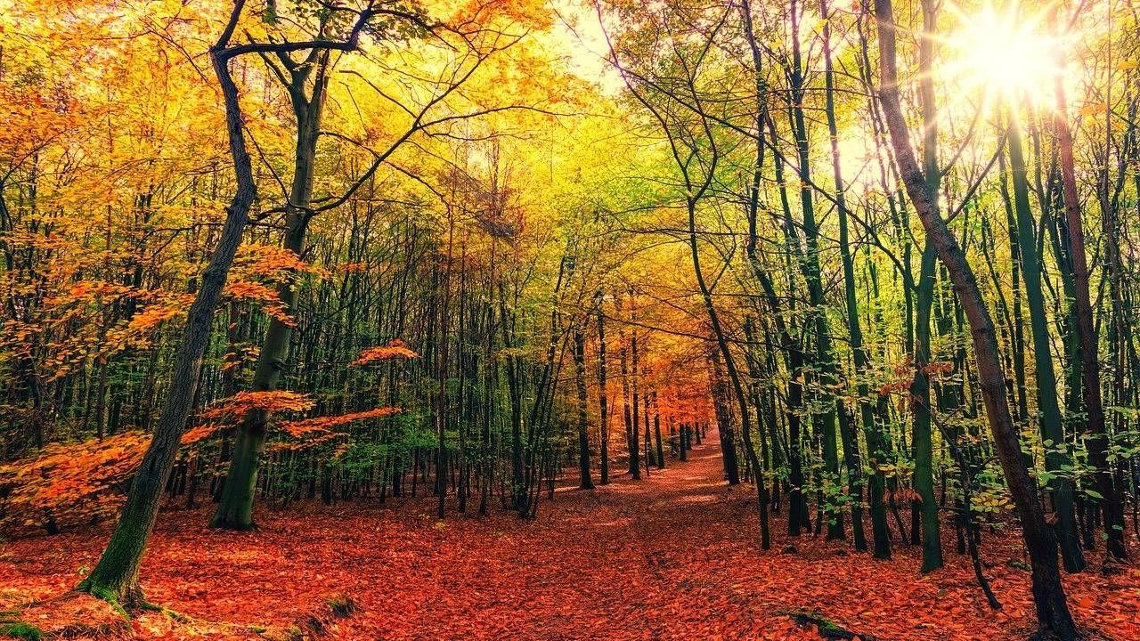 W środę rozpocznie się astronomiczna jesień (fot. Pixabay)