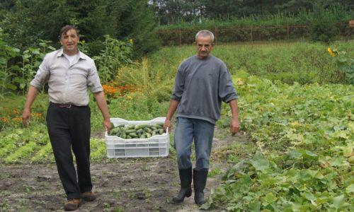 Obowiązuje równość i partnerstwo. Każdy ponosi odpowiedzialność za siebie, to nie jest schronisko, gdzie czekasz, aż ktoś ci przyniesie miskę z jedzeniem. Razem ziemię uprawiamy, razem zbieramy i użytkujemy płody rolne Fot. Zbigniew Drążkowski/Zasoby Emaus
