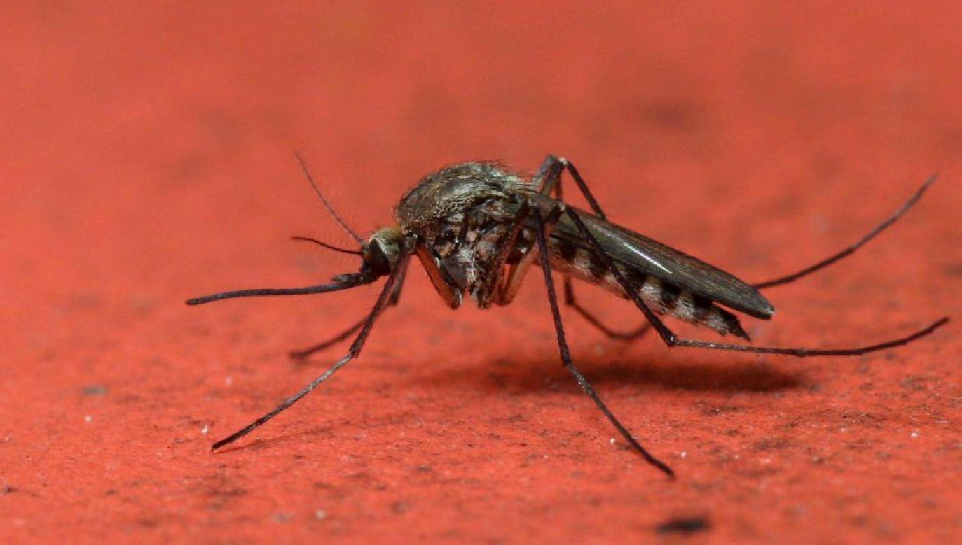 Władze miasta Bolonii rozpoczynają biologiczną walkę z komarami tygrysimi (fot.arch. PAP/Piotr Rybarczyk)