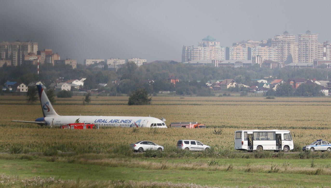 Samolot lądował bez wyciągniętego podwozia w polu (fot. PAP/EPA/SERGEI ILNITSKY)