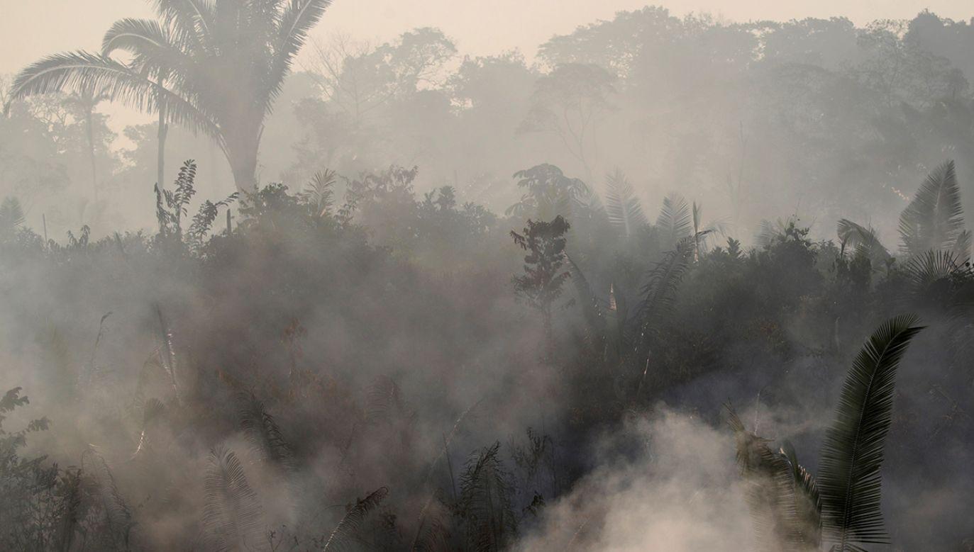Według oficjalnych danych pożary na obszarze Amazonii są w tym roku większe o 83 proc. w porównaniu z zeszłym rokiem (fot. REUTERS/Ueslei Marcelino)