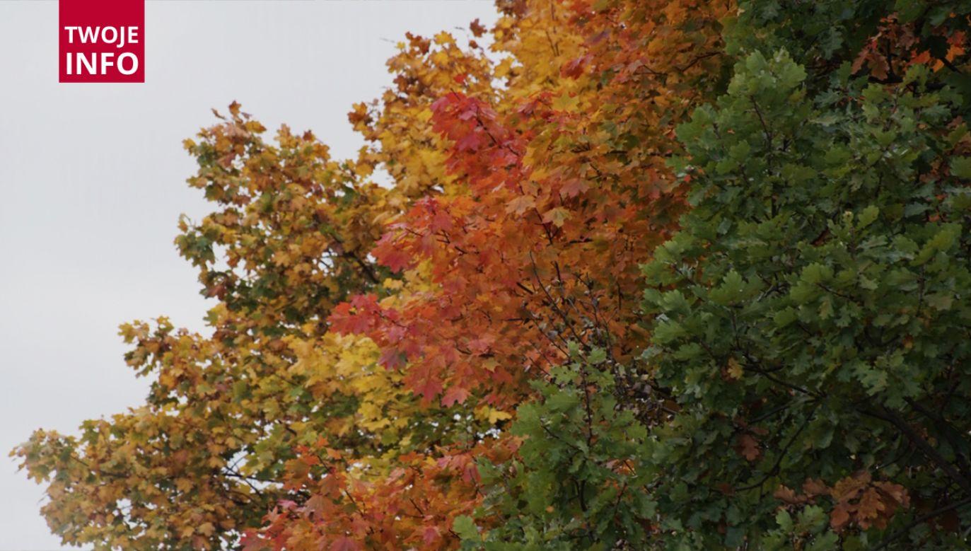 Kolorowe liście są symbolem jesieni (fot. Twoje Info)