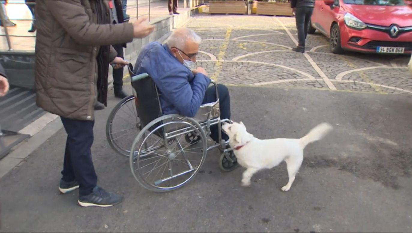 Pies czekał na właściciela przez 6 dni (fot. EBU/TURKIYE RADYO-TELEVIZYON KURUMU)