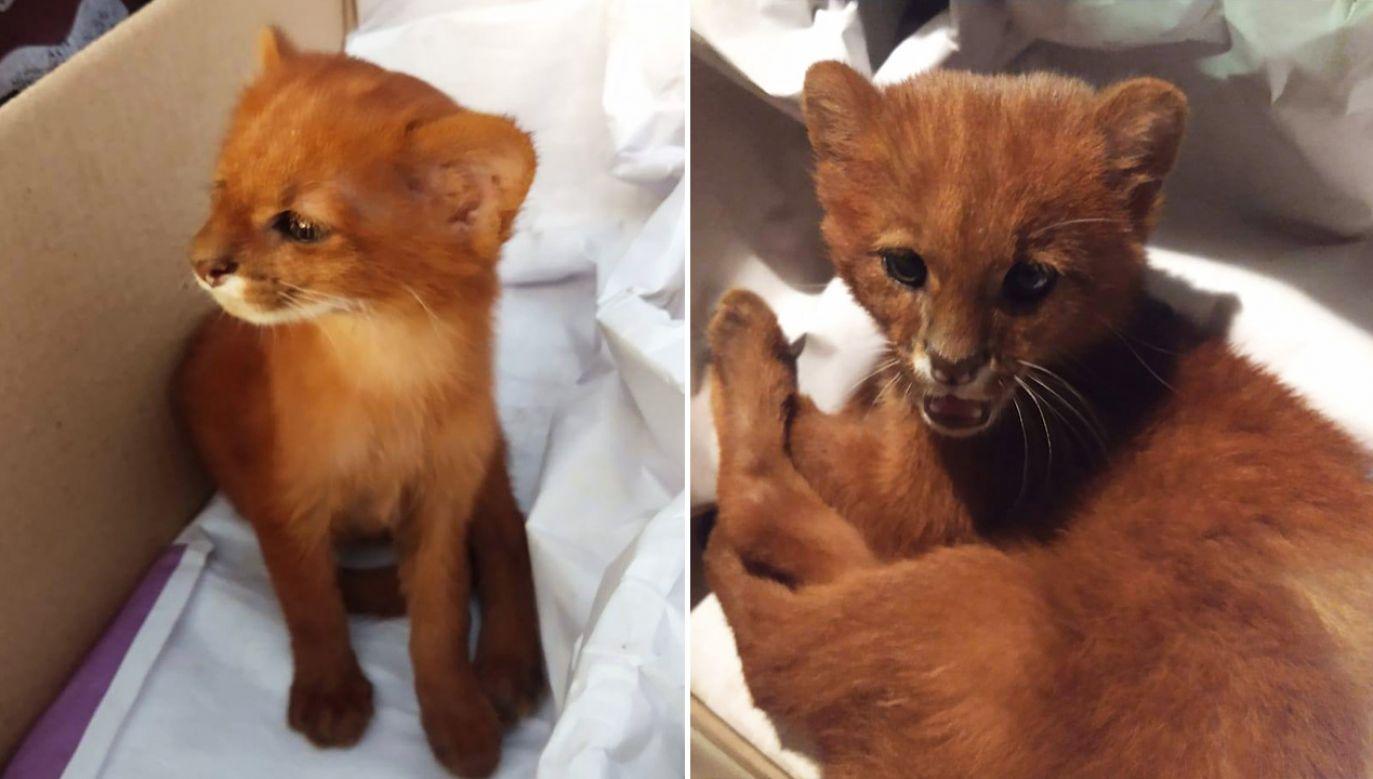 Prawda wyszła na jaw po dwóch miesiącach (fot. Facebook/FARA Fundacion Argentina de Rescate Animal)
