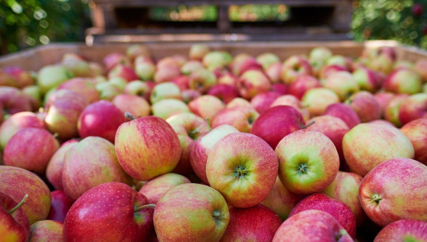 W czerwcu cena polskich jabłek przekroczyła 109 euro za 100 kg (fot. Shutterstock/Zoom Team)