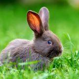 fot. Shutterstock.com 43
