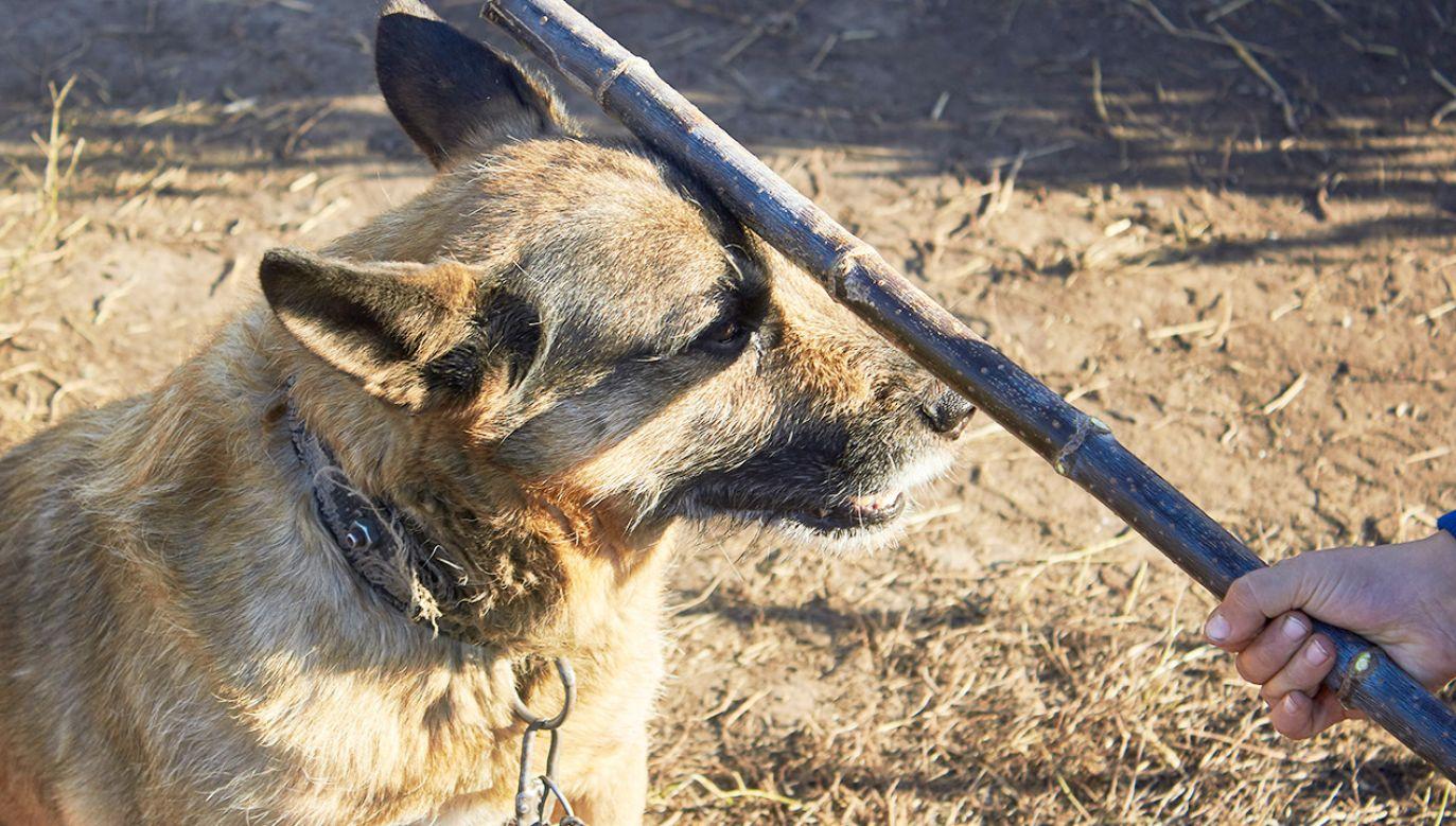 Bezdomni skatowali psa (fot. Shutterstock/Oleg Shvetsov)