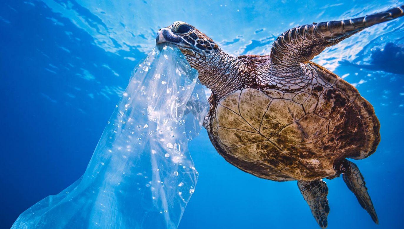 Plastik nie jest biodegradowalny daltego kumuluje się w oceanach i będzie tam pozostawał setki lat (fot. Shutterstock/Willyam Bradberry)