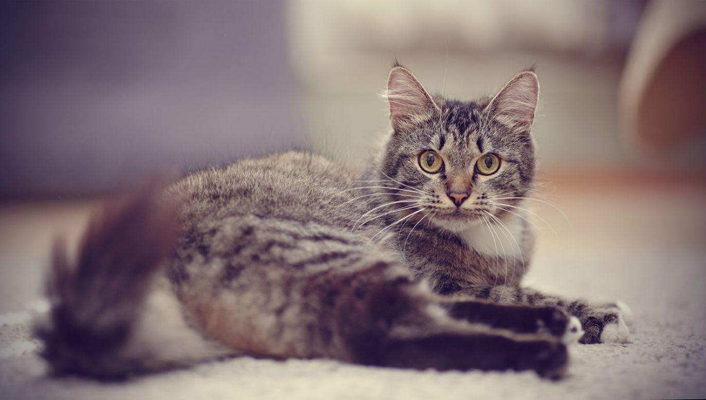 Kot Boniek około 10 lat temu przybłąkał się do ośrodka w Skwierzynie (fot. Shutterstock/Elya Vatel, zdjęcie poglądowe)
