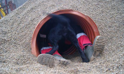 Fot. z archiwum prywatnego podkomisji psów ratowniczych GOPR