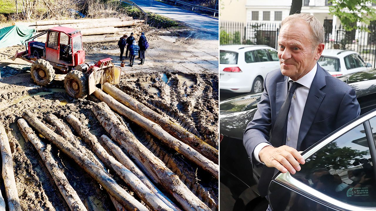 Lasy Państwowe twierdzą, że słowa Donalda Tuska o wycince to  fake news (fot. PAP/Darek Delmanowicz, Tomasz Gzell)
