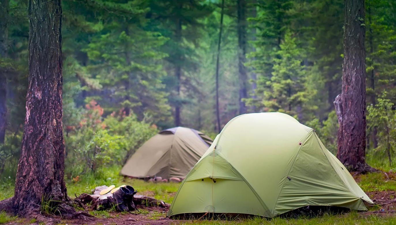 Biwakowanie w lesie staje się coraz bardziej popularne (fot. Shutterstock/TDway)