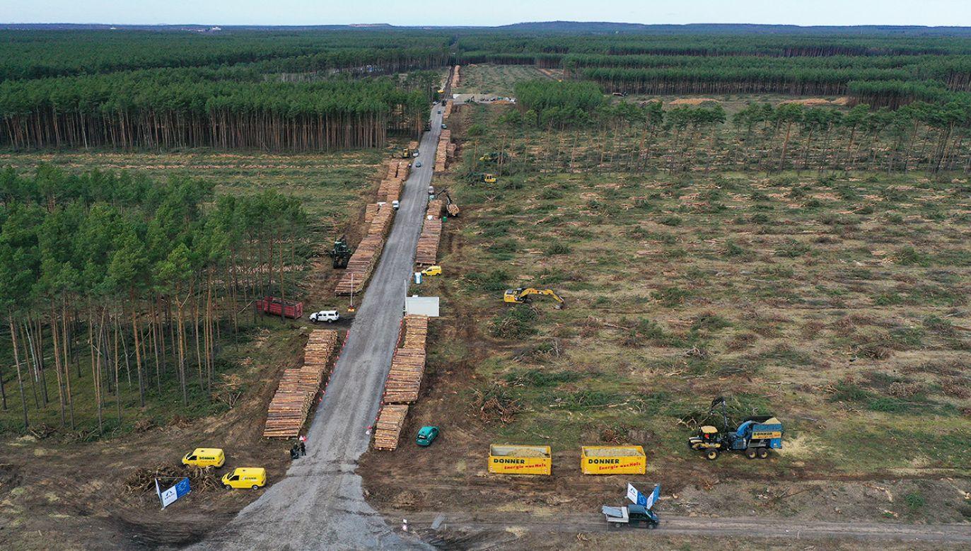 Pod fabrykę Tesli Niemcy wytną co najmniej 90 hektarów lasów (fot. Shutterstoc/Sean Gallup/Getty Image)