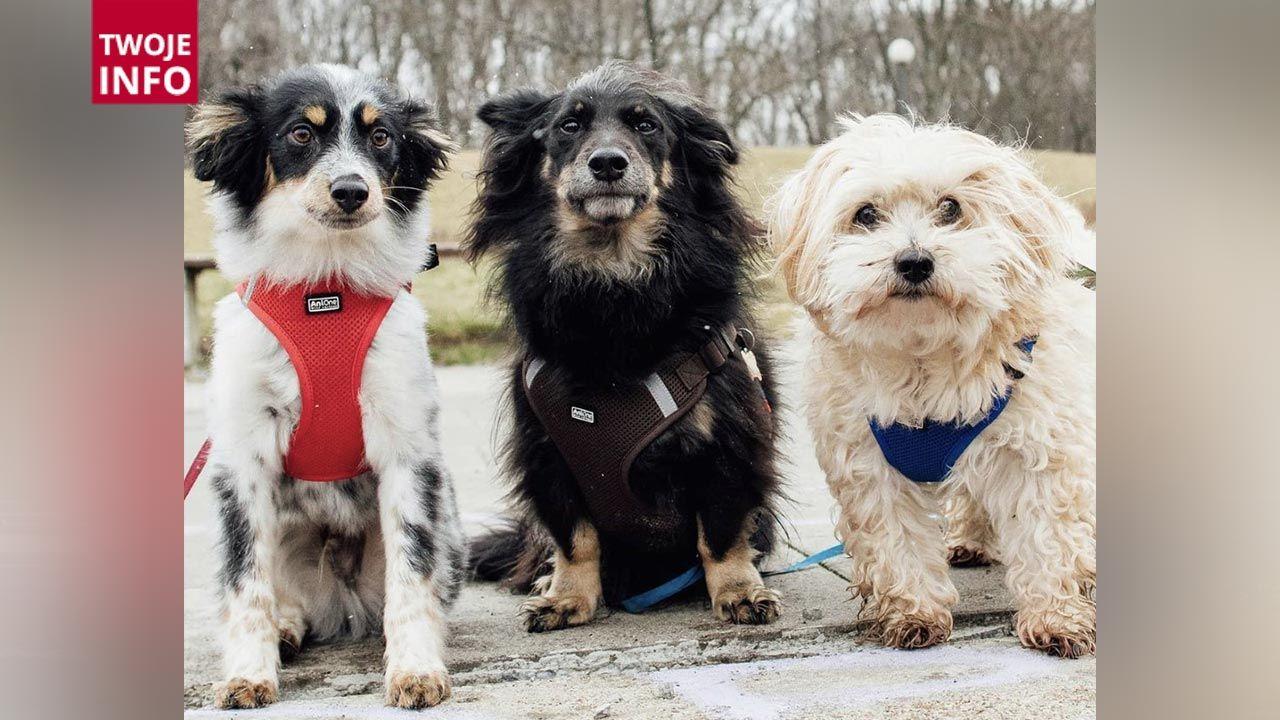 Dzień Psa ustanowiono w 2007 roku (fot. Twoje Info)