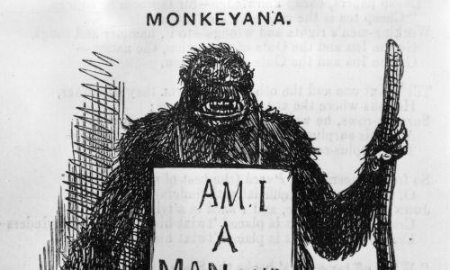 """18 maja 1861 rok. Goryl nosi tablicę z pytaniem: """"Czy jestem człowiekiemą i bratem?"""". To odpowiedź na kontrowersyjną teorię Charlesa Darwina o ewolucji rodzaju ludzkiego. Kreskówka z magazynu Punch podpisana przez """"Gorilla - Zoological Gardens"""". Fot. Hulton Archive / Getty Images"""
