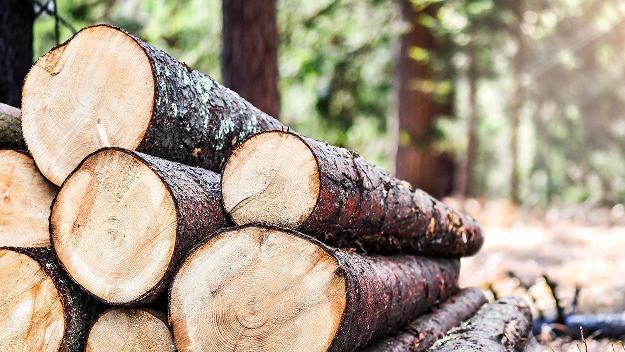 Lasy Państwowe o wzroście cen surowca (fot. Shutterstock/Krasula)