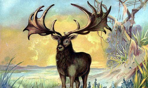 Plejstocen, jeleń olbrzymi  zwany też łosiem irlandzkim. Fot. ullstein picture / ullstein picture via Getty Images