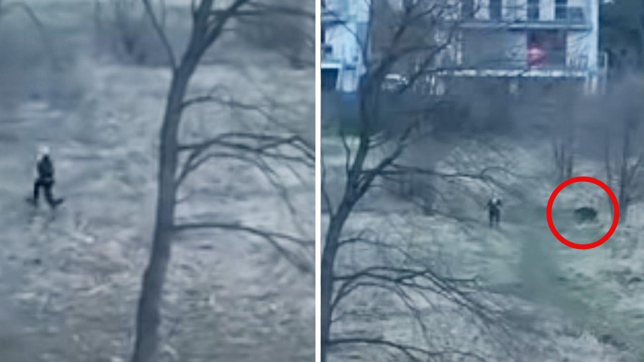 Dzik zaczął gonić kobietę, która wybrała się na spacer (fot. YouTube)