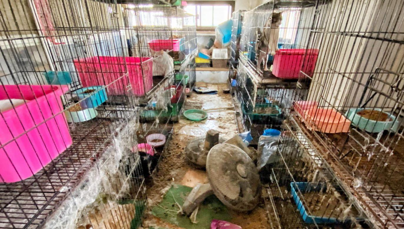Ponad 300 porzuconych kotów trafi do schroniska w Tajlandii (fot. Facebook/Saengduean Lek Chailert)