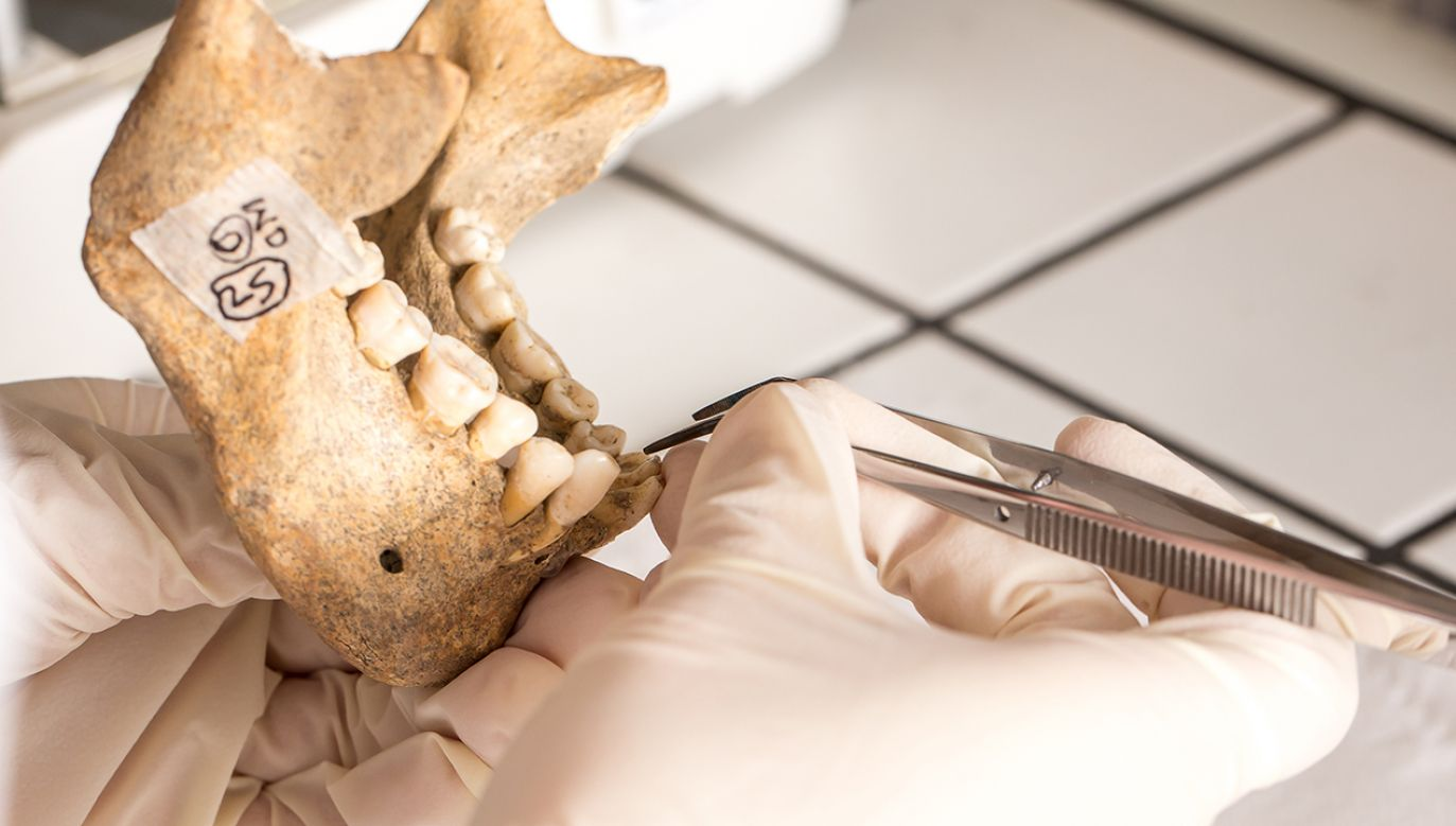 Badania genetyczne dowiodły, że nasi przodkowie z gatunku Homo sapiens krzyżowali się ze swoimi ewolucyjnymi krewniakami (fot. Shutterstock/sruilk)