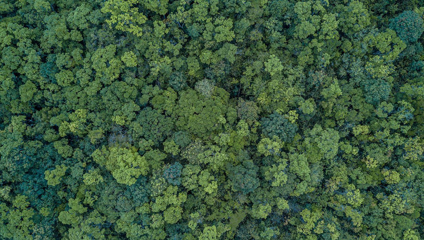 Oszacowano, że drzewa, roślinność i gleba na jednym hektarze lasu wiążą rocznie ok. 43 tys. kg CO2 (fot. Shutterstock/Avigator Fortuner)