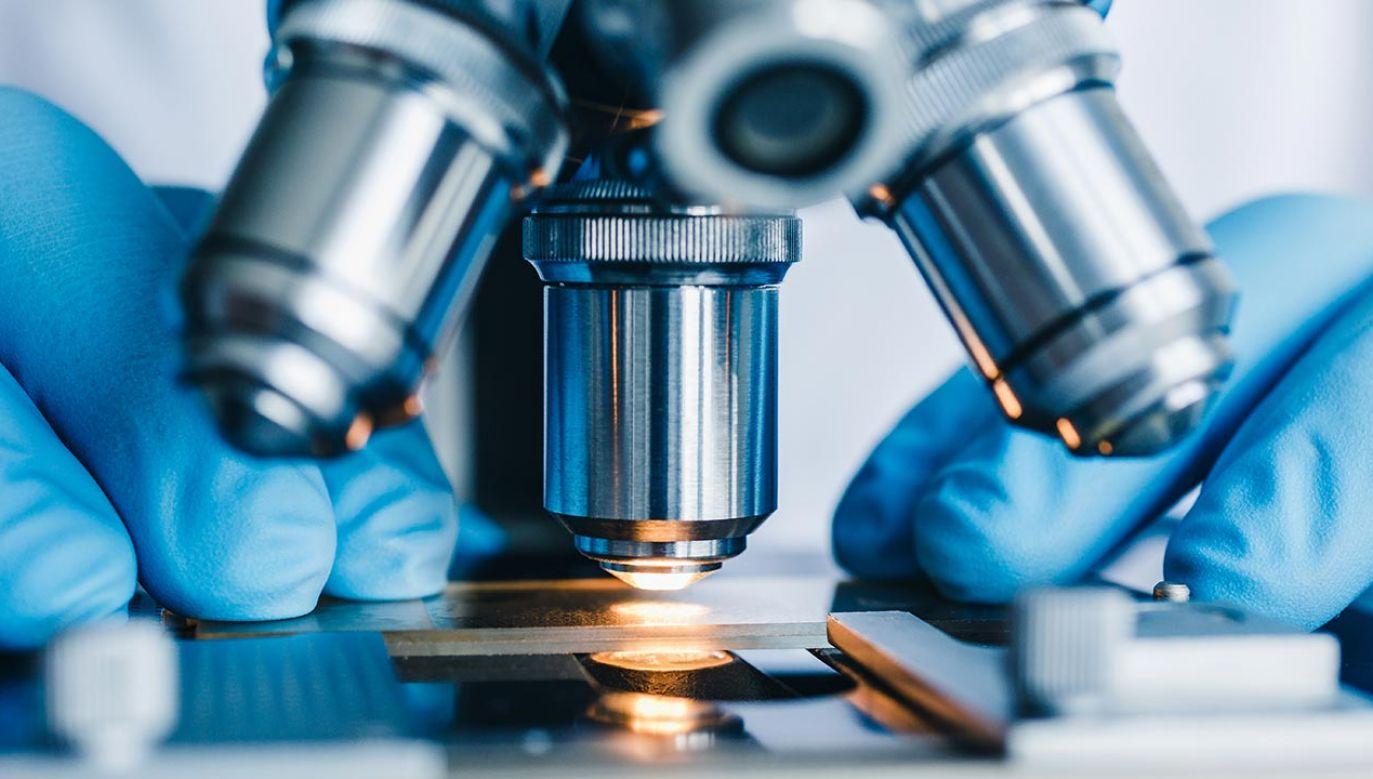Można teraz poznać życie pojedynczej żywej komórki wśród innych (fot. Shutterstock/Konstantin Kolosov)