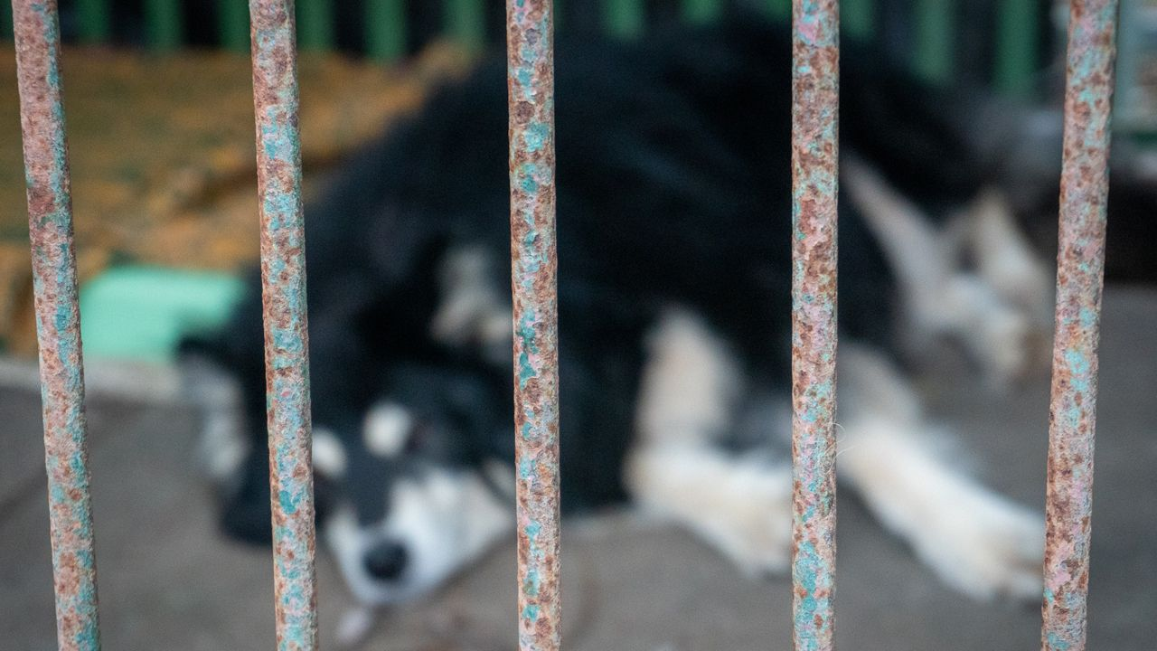 Co dalej z ze zwierzętami? (fot. portal tvp.info)