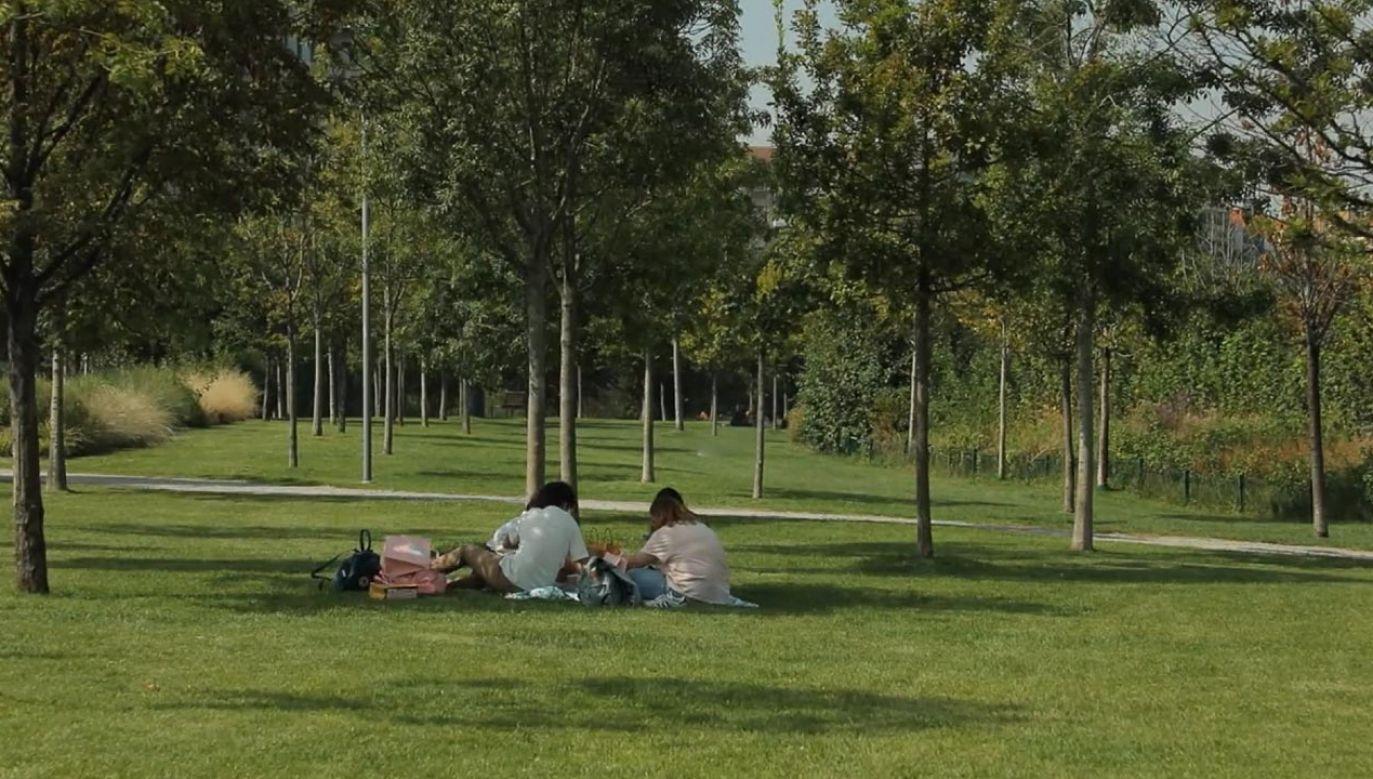 W Mediolanie w ciągu 10 lat ma zostać posadzonych 3 mln drzew (fot. FRFT - FRANCE TÉLÉVISION)