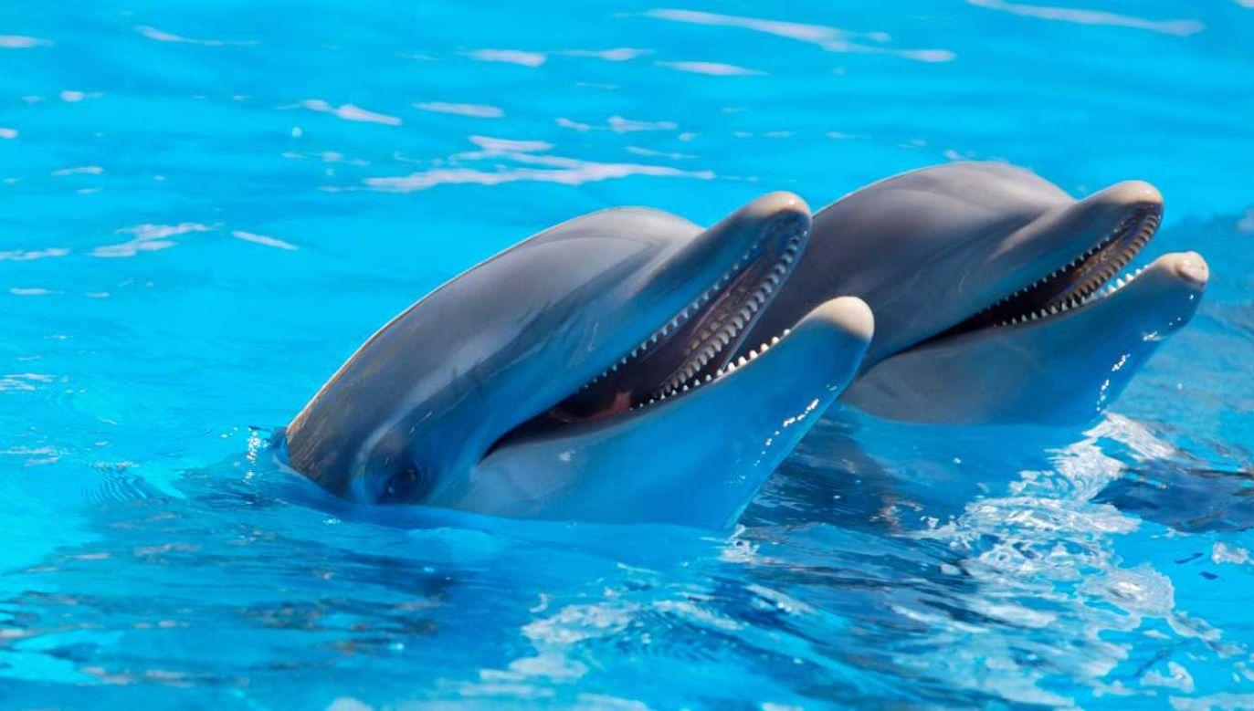 Delfiny od dawna fascynują badaczy (fot. Pexels)