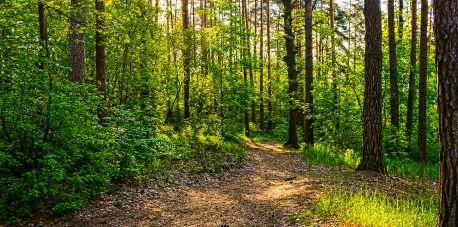"""""""Wielki Test o Lesie"""" – rozgrzewka 2"""