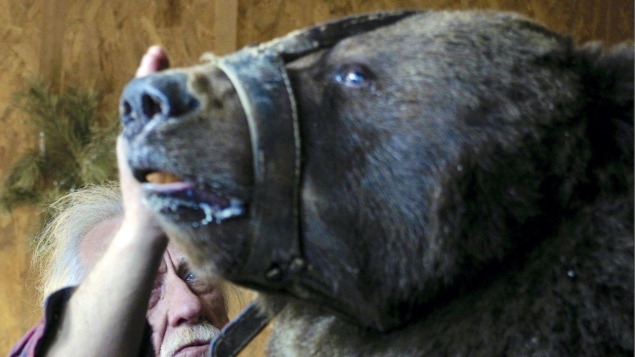 Atak niedźwiedzia w cyrku (fot. D.Rogulin\TASS\Getty Images, zdjęcie ilustracyjne)